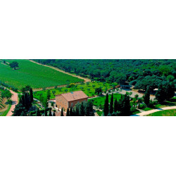 Insoglio del Cinghiale 2016 Tenuta Campo di Sasso - Antinori