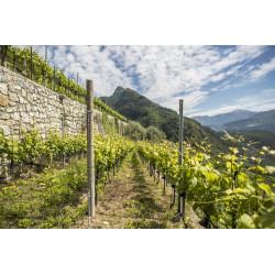 Furlet  IGT Dolomiti Bianco 2019 Az.Agr. Furletti